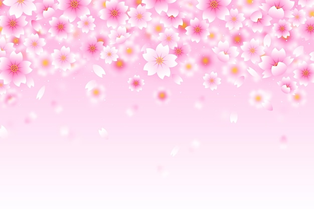 Pink gradient sakura flowers background