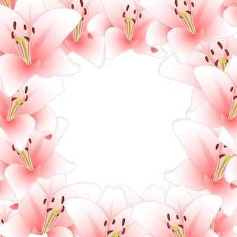 Розовый цветок лилии границы, изолированных на белом фоне2