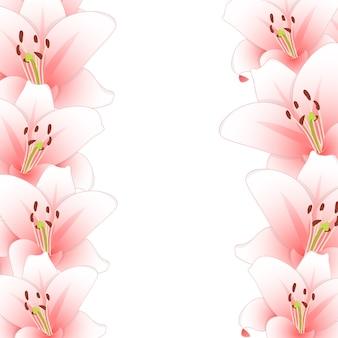 Розовая лилия цветок границы, изолированных на белом фоне