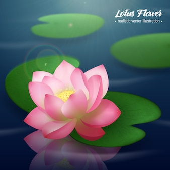 Pink lotus flower with two wide disc shaped leaves floating on water realistic illustration