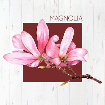 Pink magnolia background