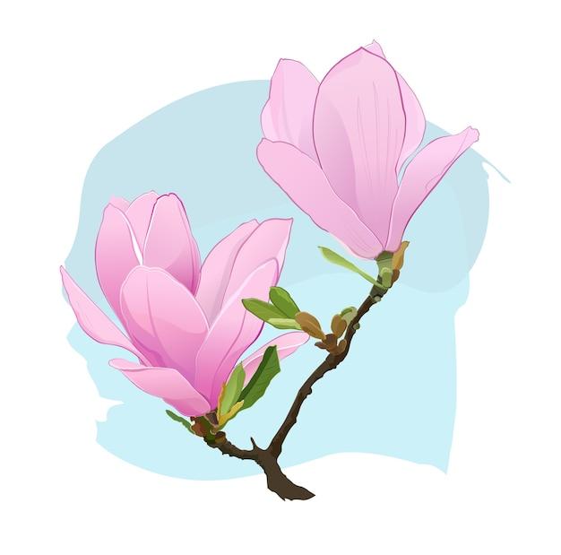 Розовые цветы магнолии на ветке