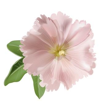 白地にピンクアオイ科の植物
