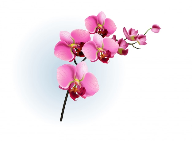 Pink orchid branch. phalaenopsis, blossom, houseplant.