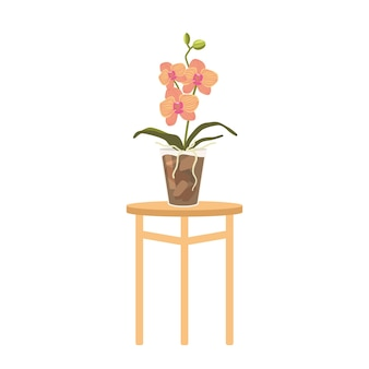 Pink orchid in flowerpot stand on table isolated on white background. tropical or domestic colorful blossom, beautiful live flora, blooming orchid design element. cartoon vector illustration