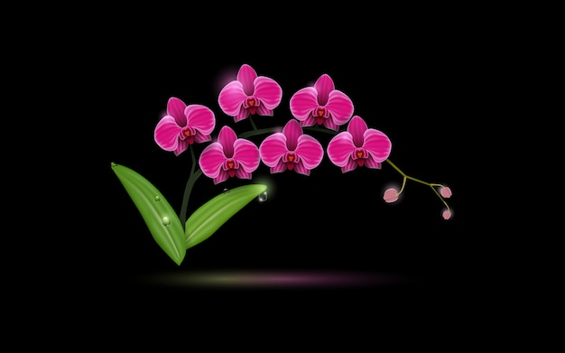 A pink orchid flowers on the black