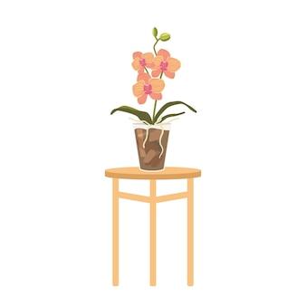 흰색 배경에 고립 된 테이블에 화분에 분홍색 난초. 열대 또는 국내 화려한 꽃, 아름다운 라이브 식물, 피는 난초 디자인 요소. 만화 벡터 일러스트 레이 션
