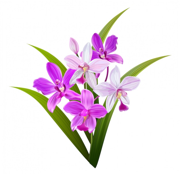Pink orchid isolated on white   illustration