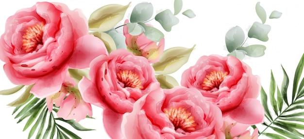 Pink peonies watercolor summer background