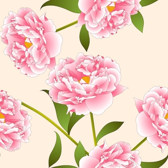 Pink peony flower on beige ivory background