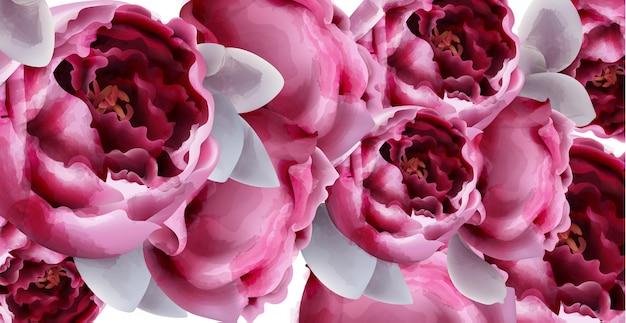 Розовый пион цветы фон акварель