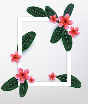 Pink Plumaria flower with copy space