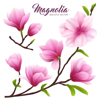 Pink realistic magnolia flower icon set flowers on branch with leaves beautiful and cute