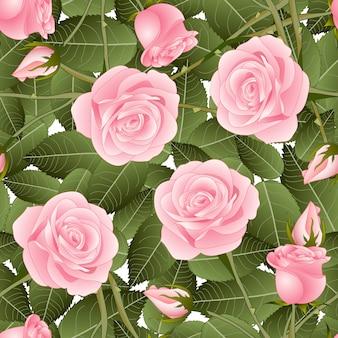 白い背景にピンクのローズと緑の葉