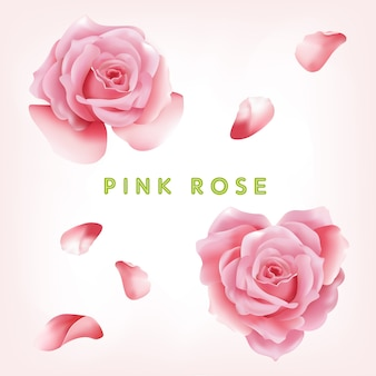 Pink rose flowers collection