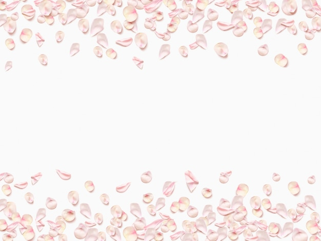 Pink rose petals isolated on white background.