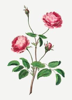 ジョン・エドワーズのアートワークからリミックスされたピンクのバラのベクトルヴィンテージ花柄アートプリント