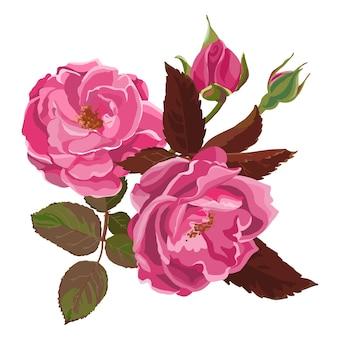 꽃이 만발한 분홍색 장미, 꽃잎, 잎, 꽃봉오리가 있는 꽃이 피는 고립된 아이콘. 가시가 있는 줄기. 식물의 생물다양성, 휴일 선물로 사용되는 식물학. 카드 장식. 평면 스타일의 벡터