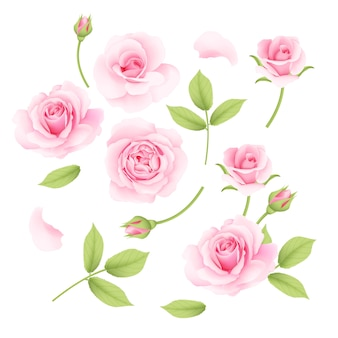 Pink roses vector collection