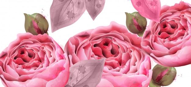 핑크 장미 수채화 배경