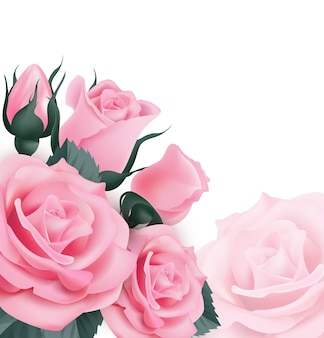 Pink rosesbeautiful greeting card with a bouquet of roses on white background vector illustration