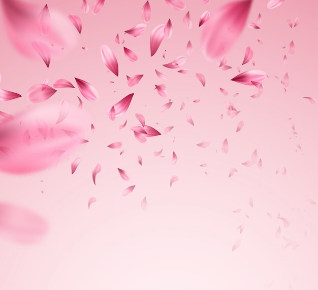 Pink sakura falling petals background.