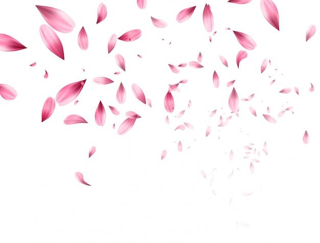 핑크 사쿠라 떨어지는 꽃잎 배경.