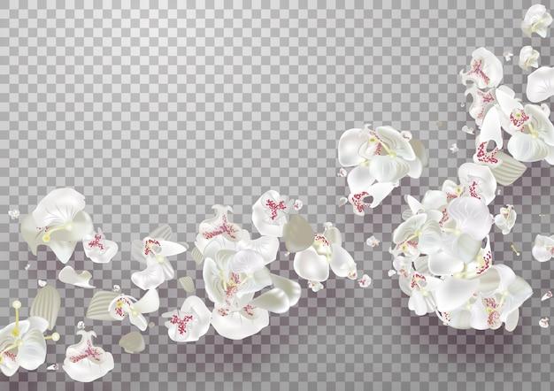 투명 배경에 핑크 사쿠라 떨어지는 꽃잎