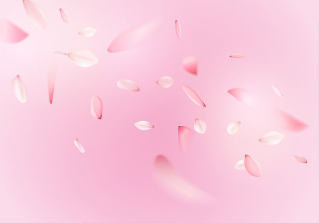 Pink sakura flower petals