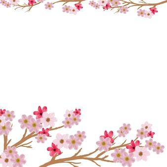 Розовая сакура на белом фоне