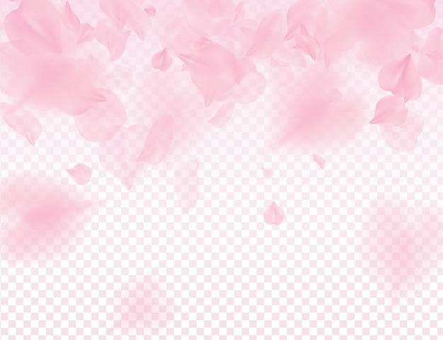 Розовые лепестки сакуры на прозрачном фоне.