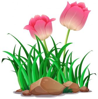 庭のピンクチューリップの花
