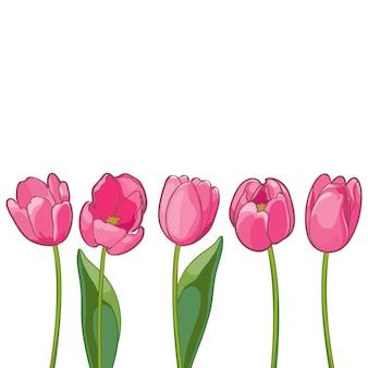 白地にピンクのチューリップ。
