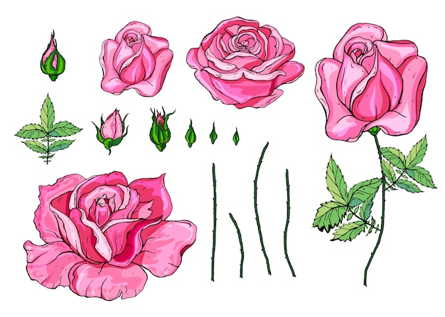 Pink vector roses and green leave elements set