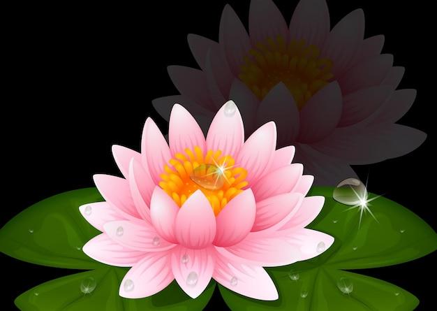 黒の背景にピンクの睡蓮