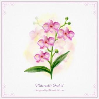 ピンクの水彩蘭