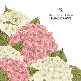 Pink and white hydrangea flower drawings.