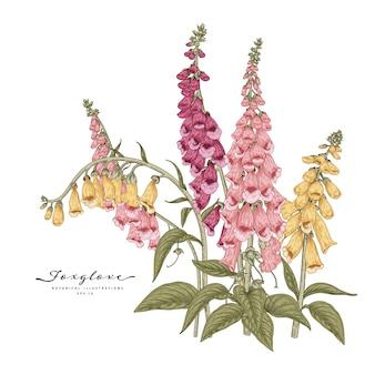 ピンク、黄色、紫のジギタリスの花
