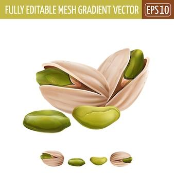 Pistachio nuts illustration on white