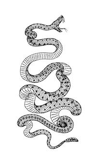 구덩이 바이퍼 크로탈린 뱀 또는 구덩이 가산기 악의 찬 파충류 그림 새겨진 손 오래 된