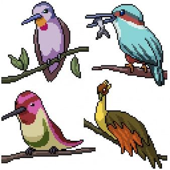 Пиксель арт набор изолированных птица на ветке