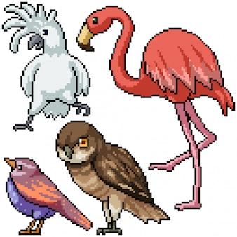 Пиксель арт набор изолированных видов диких птиц