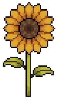 Pixel art sunflower item for 8bit game on white background