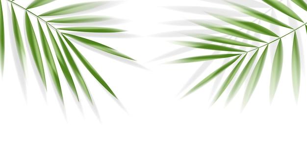 Листья сливы на белом фоне с обтравочным контуром для вектора элемента дизайна тропических листьев