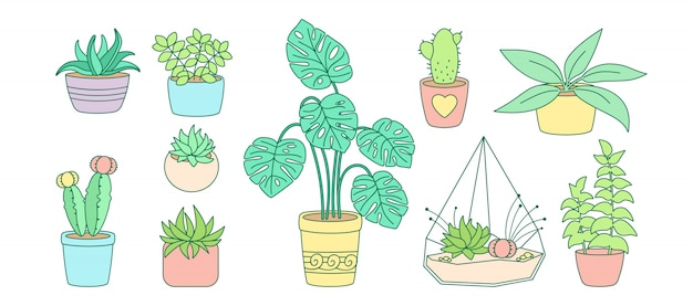 Растения и суккуленты, керамическая плоская линия. цвет линейный мультфильм дом цветок. комнатные растения, кактус, горшок монстера. коллекция стильного интерьера. изолированная иллюстрация