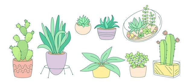 Растения и суккуленты, керамическая плоская линия. цвет линейный мультфильм дом крытый цветок. комнатные растения, кактус, горшок монстера. модная коллекция домашнего декора. изолированная иллюстрация