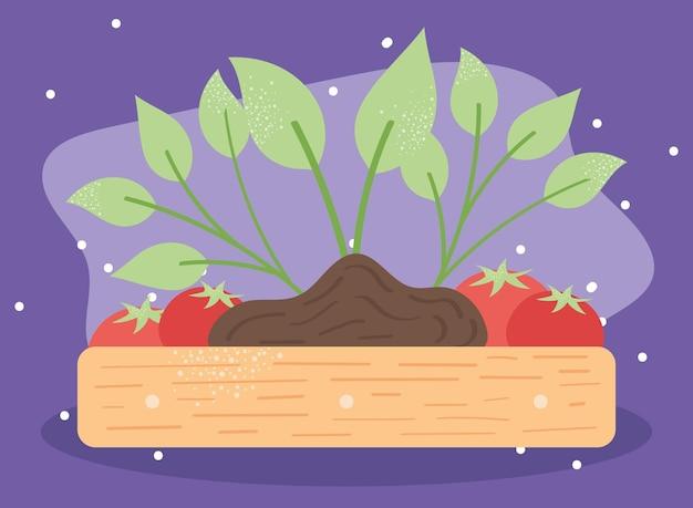 Растение и помидоры
