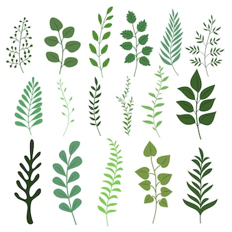 Plant branch with green garden leaves vector set