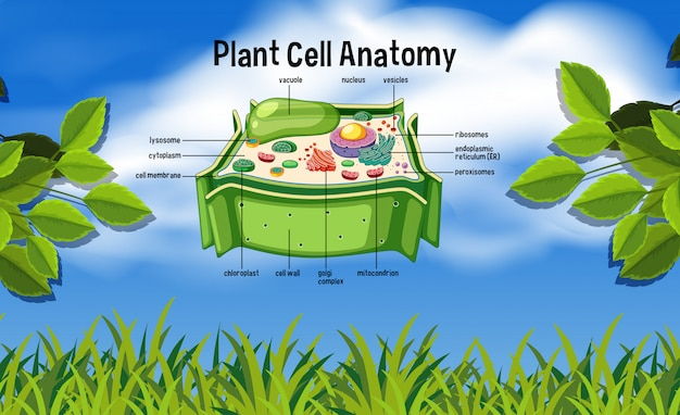 Plant cell anatomy in nature