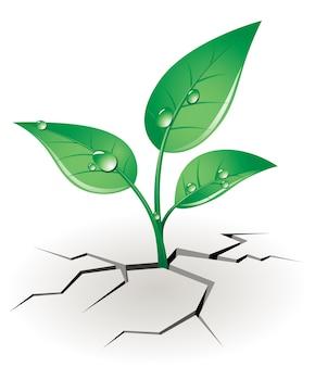 Растение, растущее из трещины в земле